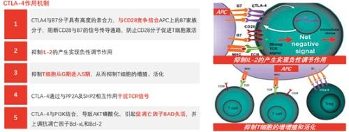 和铂医药-B(02142.HK)公布HBM4003临床I期数据,突显疗效及安全性优势