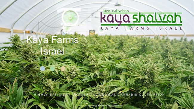 大麻公司Kaya Holdings的以色列子公司獲得了大麻種植和加工許可證的初步批准