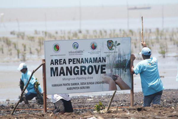 Rimba Raya Biodiversity Reserve Collaborates to Restore Mangrove Forests in Seruyan