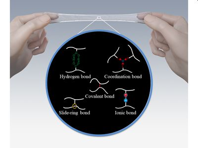 Elastomers develop stronger bonds of attachment