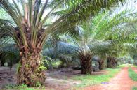 Converting Palm Oil Wastes into Bio-protein